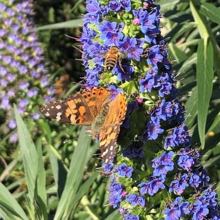 pollinators 1 web