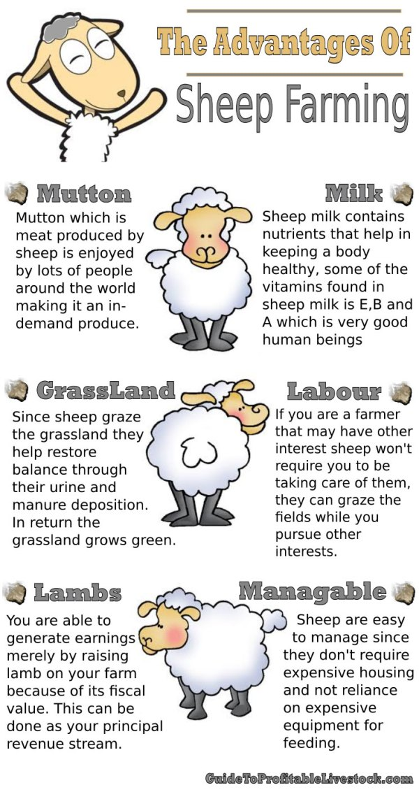Advantages-Of-Sheep-Farming-infographic