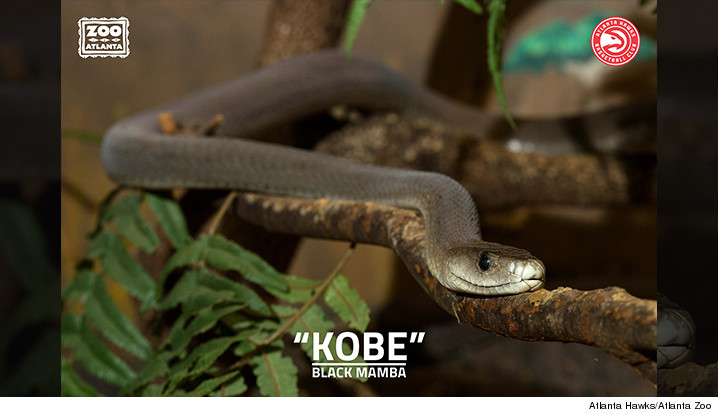 1203-main-mamba-atlanta-zoo-01
