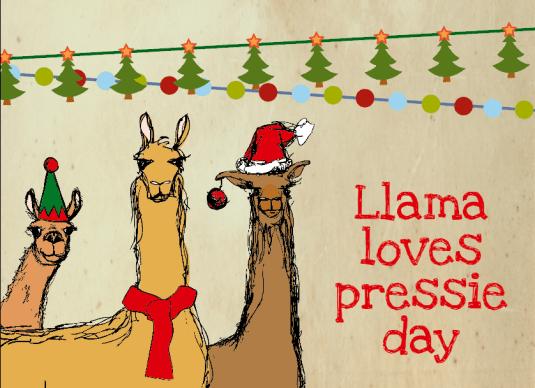 Llama loves pressie day