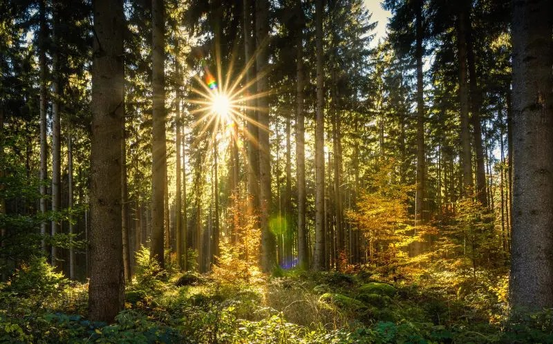 In this pair of videos,. How To Take Beautiful Photos In The Forest