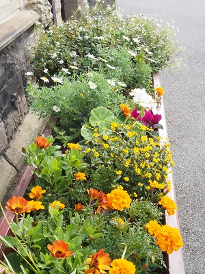 Flower trough at Holy Trinity.