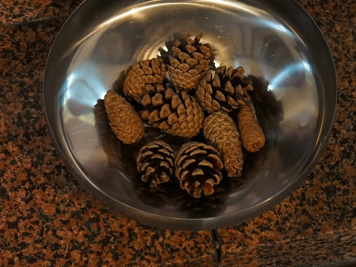 Pine cones at St. Tudno's