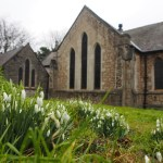 Snowdrops in St. George's churchyard