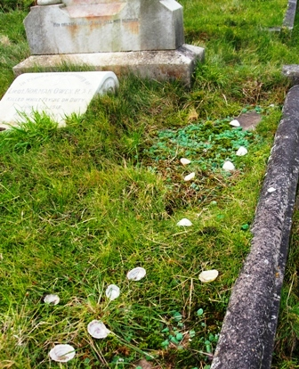 Limpet shells on a grave.