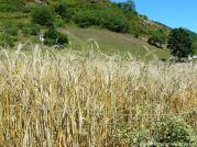 Llanos de Somerón. Díes de branu (9)