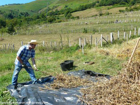 Machacando los arbeyos con una forqueta de ablanu