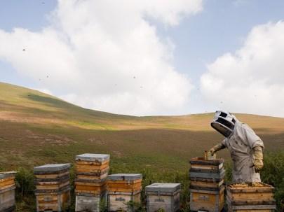 miel llaria cosecha brezo ecologica