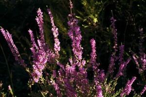 miel rioja bio ecologica llaria