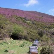 escarzosa anguiano miel llaria brezo verano