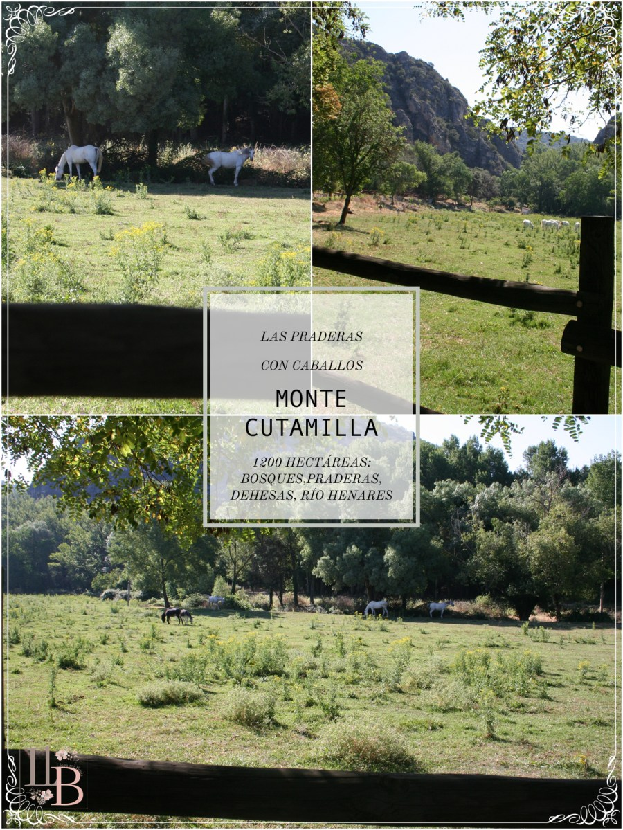 Praderas de Finca Monte Cutamilla