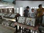 Patrick, Thibault and Leandro in the insect museum