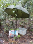 Luckily we have a big umbrella!