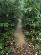Walking path or river?