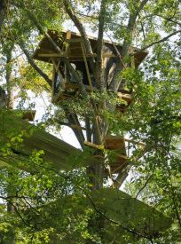 Stop the Keystone XL Pipeline_tree top activists tree house close up