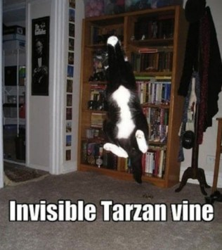 Invisible_cat_tarzan_vine