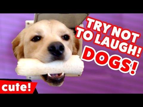 Try Not To Laugh At These Funny Dog Videos Weekly Compilation | Kyoot Animals
