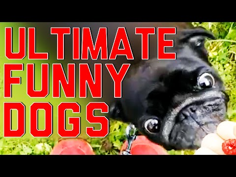 Ultimate Funny Dogs Compilation by FailArmy
