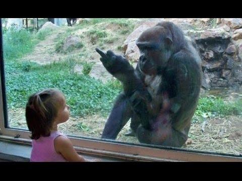 Funniest Zoo Animals