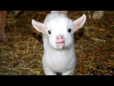 Cutest animal sounds – Funny and cute animal compilation