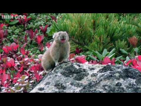 Funny Talking Animals – Walk On The Wild Side – Episode Six Preview – BBC One