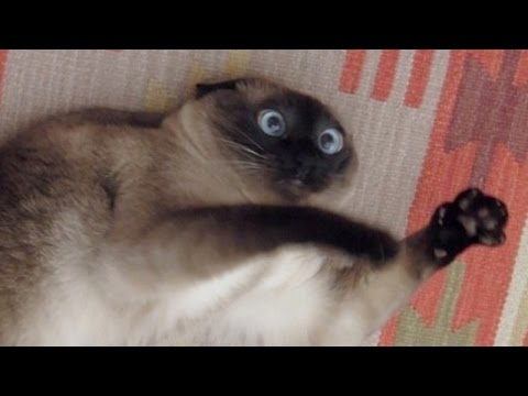 Cats just never fail to make us laugh – Funny cat compilation