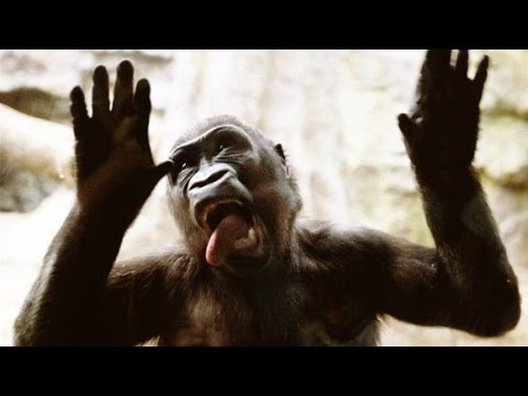 Funniest Zoo Animals – Best moments