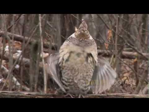 Nature Footage: Funny Wild Animals Video