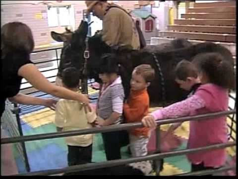 News 13/SSPTV Story On Young's Funny Farm Therapy Animals.mov