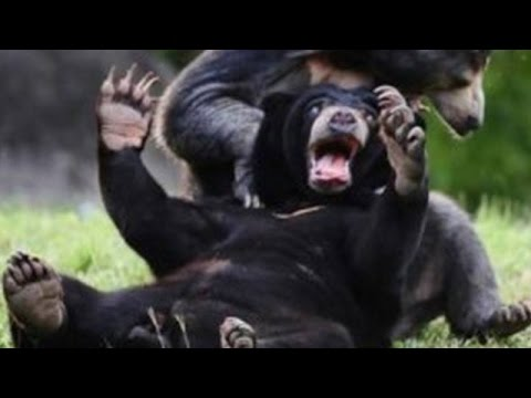 Wild animals can be even funnier than pets – Funny wild animals compilation