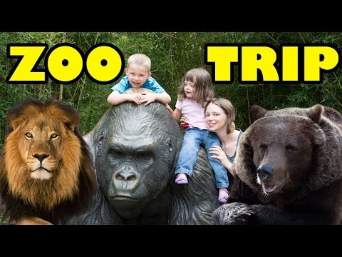 Zoo Animals – Cute Animals – Funny Animals – An Amazing Zoo Trip
