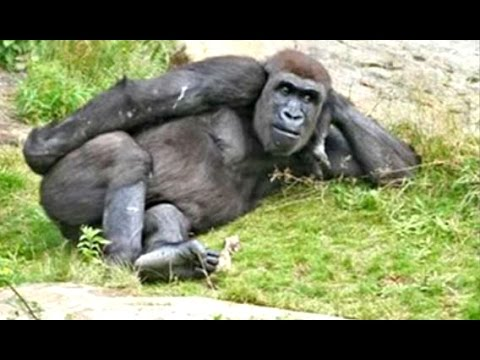 Funny Videos Of Funny Animals – Try Not To Laugh Challenge 2016