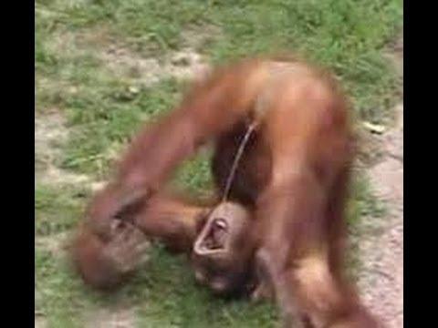 Top Funniest Monkeys Compilation 2014