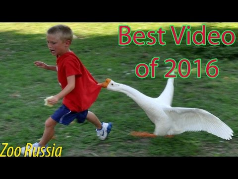 Best Funny Animal Compilation 2016 | Funniest Animal Fails Compilation 2016 | Cute Animals 2016