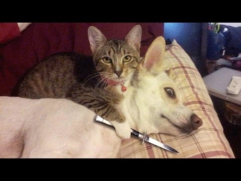 IF YOU LAUGH YOU LOSE CHALLENGE – Cats & Dogs – Who is the funniest to you?