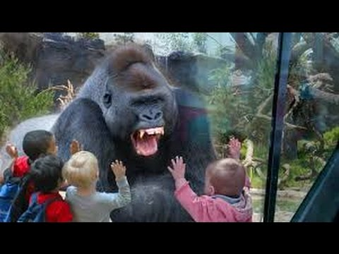 Kids and wild animals At The Zoo – Rainforest Animals and African animals