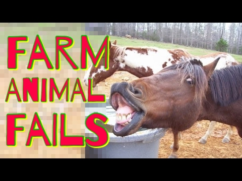 FARM ANIMAL FAILS 2017 | Funny Fail Compilation