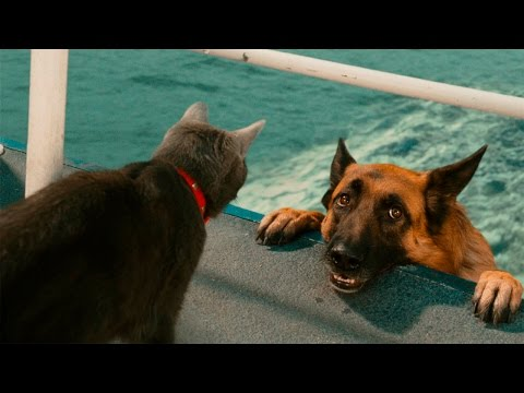 Funny Cats And Dogs – Funny Cats vs Dogs – Funny Animals Compilation