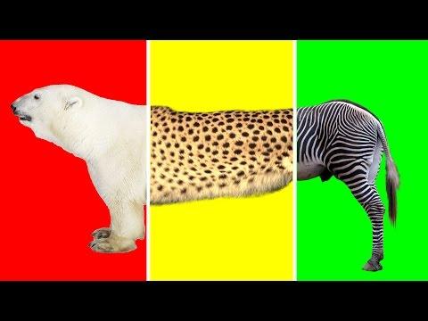 Wild Animals with Wrong Heads | Giraffe, Cheetah, Zebra & Polar Bear | Funny Animals Video for Kids