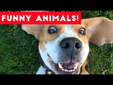 Funniest Pets of the Week Compilation August 2017 | Funny Pet Videos
