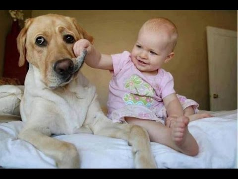 Top 25 Funny Dog Videos Of 2016!!
