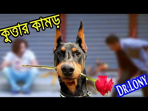 Bangla Funny Dog Videos Try Not To Laugh | Bangla Funny Video | Dr Lony Funny Videos