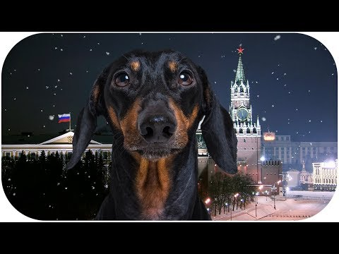 NEW YEAR'S message of the DOG PRESIDENT! Funny animal video!