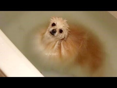 FUNNY DOGS + WATER = You LAUGH (Funny DOG VIDEOS compilation)