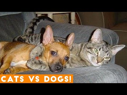 The Funniest Dogs Vs. Cats Compilation 2018  Funny Pet Videos
