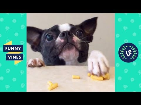 TRY NOT TO LAUGH – Funny Animals Compilation | Cute Dog Videos | Funny Vines April 2018