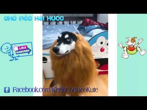 Funny dog music videos – Những chú chó hài hước bá đạo | Try not to laugh challenge