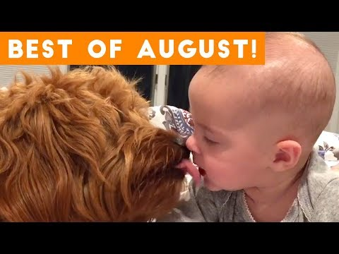 Ultimate Animal Reactions & Bloopers of August  2018 | Funny Pet Videos