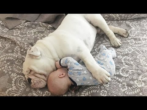 Funniest Dog Babysitting Dog Love Baby – Cute Baby Video