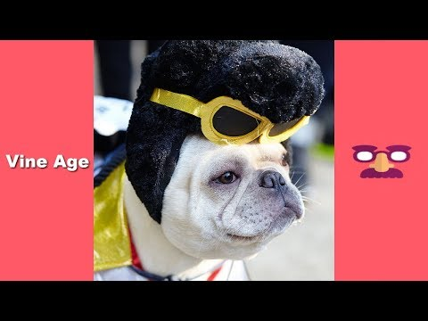 FUNNY DOGS Compilation | TRY NOT to LAUGH Watching Funny Videos November 2018 – Vine Age✔